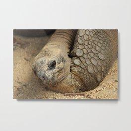 sleepy turtle Metal Print