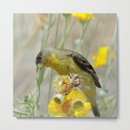 Feasting Finch Metal Print
