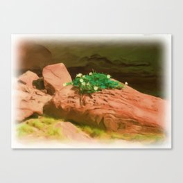 Datura Cavern Canvas Print