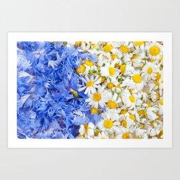 Blue cornflower and white chamomile Art Print