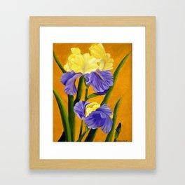 German Bearded Iris Framed Art Print