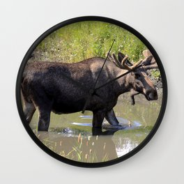 Moose standing in the water Wall Clock