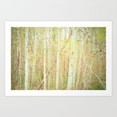 White Birch Trees - Yellow Art Print