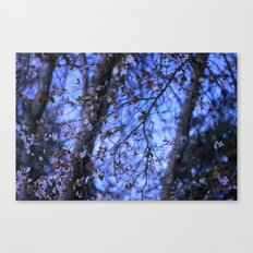 Spring is coming Canvas Print