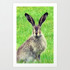 The Rabbit - for iphone Art Print