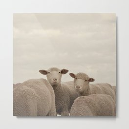 Smiling Sheep  Metal Print