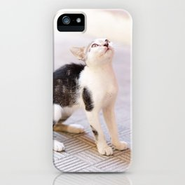 47. Baby Cat in Cuba, Cuba iPhone Case