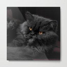 Cat_20180101_by_JAMFoto Metal Print