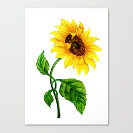 Summer Spring Sunflower Canvas Print