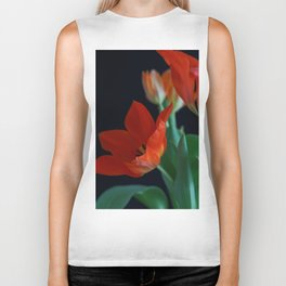 Close up of Crimson Red Tulip on Black Background Biker Tank