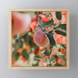 Autumn Apple VII Framed Mini Art Print