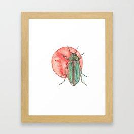 Iridescent Beetle Framed Art Print