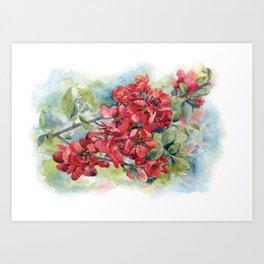 Watercolor Apple quince bloom Art Print