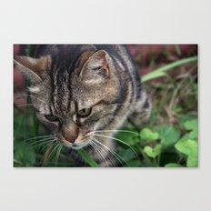 Outgoing cat 085 Canvas Print