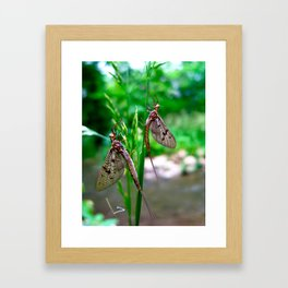 May we Fly together? Framed Art Print