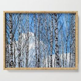 Birch Trees. Early Spring Serving Tray