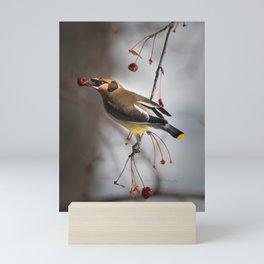 Cedar Waxwing on Branch Mini Art Print