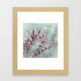Judas Tree Framed Art Print
