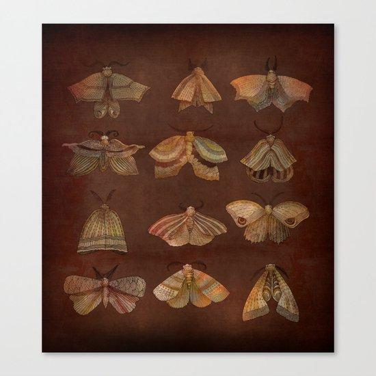Moth Collector Canvas Print