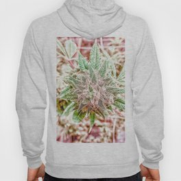 Flower Star Blooming Bud Indoor Hydro Grow Room Top Shelf Hoody