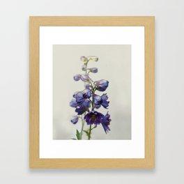 Delphinium Framed Art Print
