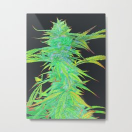 Hemp harvest art number 4 Metal Print