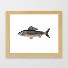 Grayling Framed Art Print