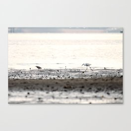 Scroll on the beach. Canvas Print