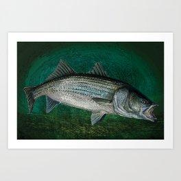 Striped Bass Fishing Art Prints Art Print