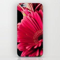 Pink Shadows iPhone & iPod Skin