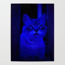 Kitty in Blue Light Poster