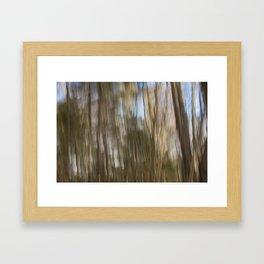 Cape Elizabeth Land Trust Trees Framed Art Print