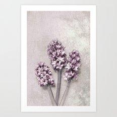 Delicate Hyacinths Art Print