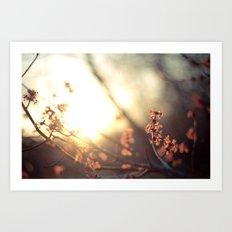 Bloom at Sunset Art Print