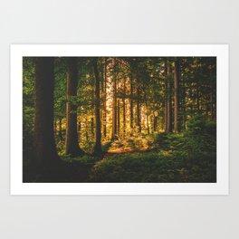Mixed Forest Art Print