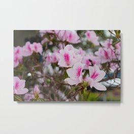 Pink flowers in a summer garden Metal Print