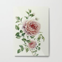 Beautiful Roses Metal Print