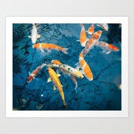 Koi Pond in Japan Art Print