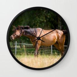 Royal class of horses, an Arabian thoroughbred Wall Clock