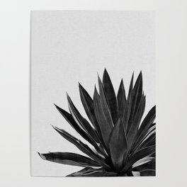 Agave Cactus Black & White Poster