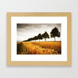 Golden grain field and trees in summer Framed Art Print