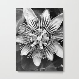 Passion Flower (Black and White) Metal Print