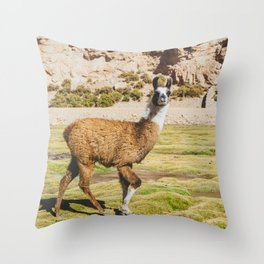 Curious llama in Bolivia Throw Pillow