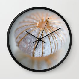 Sea Urchin Shell Wall Clock