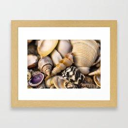 Sea Shell Vision Framed Art Print