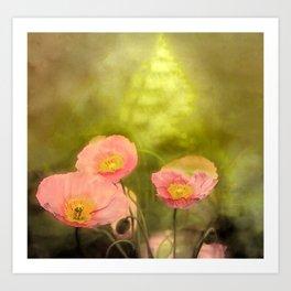 Pale peach poppy Art Print