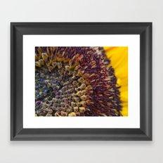 Sunflower macro Framed Art Print