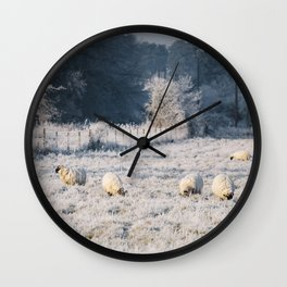 Sheep grazing a frost covered field. Norfolk, UK. Wall Clock