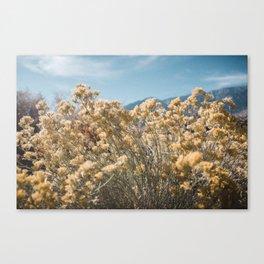 California Yellow Flowers Canvas Print
