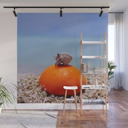 orange and hermit crab Wall Mural